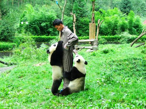 Wolong Pandaforschungszentrum 2