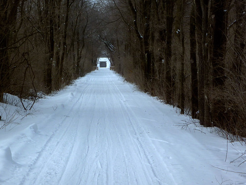 Farley Tree Tunnel
