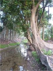 全台僅存不多的自然水圳護岸, 屏東萬巒五溝水圳面臨水泥化危機。