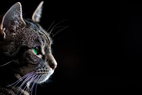 [フリー画像] 動物, 哺乳類, ネコ科, 猫・ネコ, 201101240500