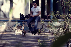(Mohammad Reza Hassani) Tags: cats man cafe feed tehran  naderi   postaday2011
