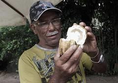 vendedor de cacau (jakza - Jaque Zattera) Tags: bahia homem mostrando fruta