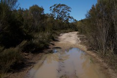 Wet tracks (Val in Sydney) Tags: muogamarra national park nsw australia australie