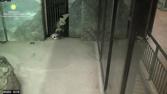 2016_09-25k (gkoo19681) Tags: beibei meixiang playtime topsyturvy lovenibbles givingin ccncby nationalzoo