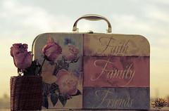 (عفاف المعيوف) Tags: flower bag ورود سفر زهور حقيبة