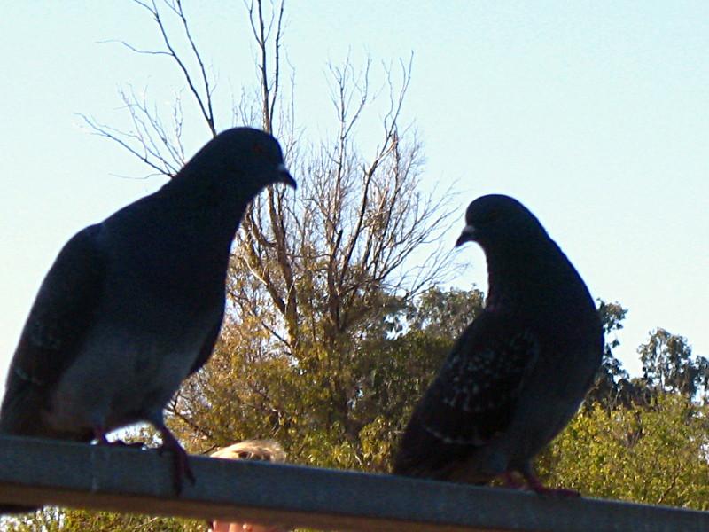 04-12-2010-silhouette-gossip