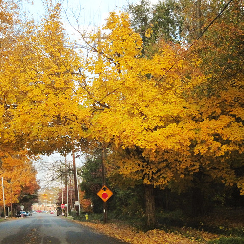 Fall in Five Points