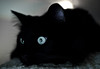 Cat's Eye @ f/1.8 (mjkjr) Tags: reflection window cat ga blackcat nikon kitten bokeh availablelight indoor f18 gaze jingle mycat pupil newnan orly 2010 schrodinger potn 30265 december5 lolcats 35mmf18g afsdxnikkor35mmf18g december52010 httpwwwflickrcomphotosmjkjr