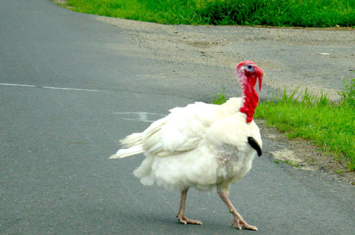 Turkey on the Road