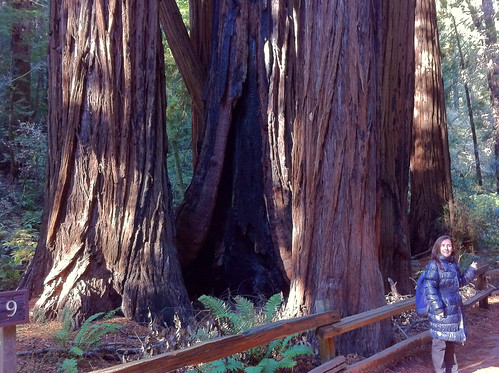 Muir Woods - Redwoods, Marga