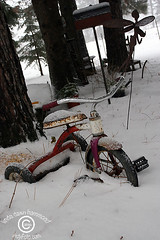 XmasThunderBay_20091226_25 (DawnOne) Tags: old trees lake snow ontario art bike cat toys dawn bay wooden photos  siamese superior linda fir hammond thunder womans indyfotocom