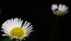 Near and far (rakkasan69) Tags: flowers sky plants black macro field canon landscape near tony babcock far depth picnik xsi