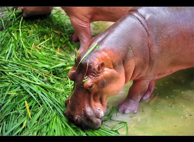 Zoo Taiping 69