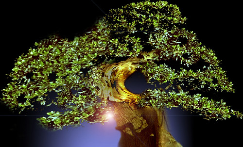"""Bonsai 089 • <a style=""""font-size:0.8em;"""" href=""""http://www.flickr.com/photos/30735181@N00/5261325735/"""" target=""""_blank"""">View on Flickr</a>"""