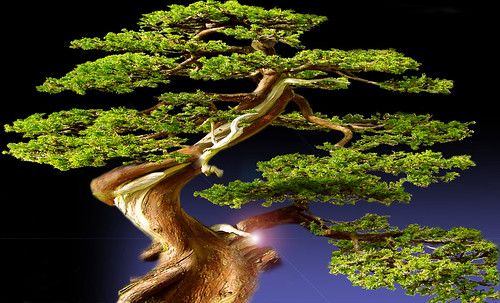 """Bonsai 085 • <a style=""""font-size:0.8em;"""" href=""""http://www.flickr.com/photos/30735181@N00/5261326745/"""" target=""""_blank"""">View on Flickr</a>"""