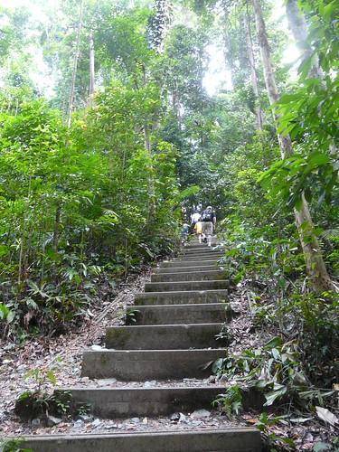 Keep Climbing (Bukit Timah)