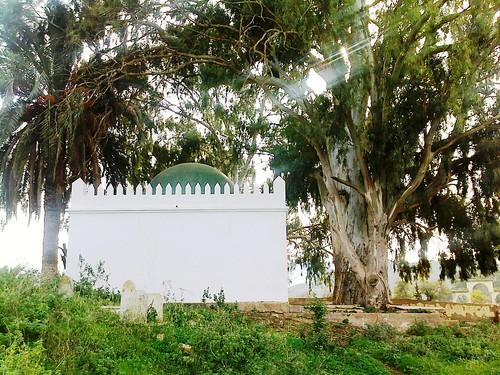 Sidi Mhammed Aberkane سيدي امحمّد أبركان