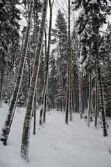 It has been snowing a lot here (aixcracker) Tags: winter snow suomi finland vinter december lumi talvi sn porvoo lunta borg 24mmf28d pellinki pellinge joulukuu nikond3