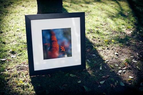 fall_01122010_print