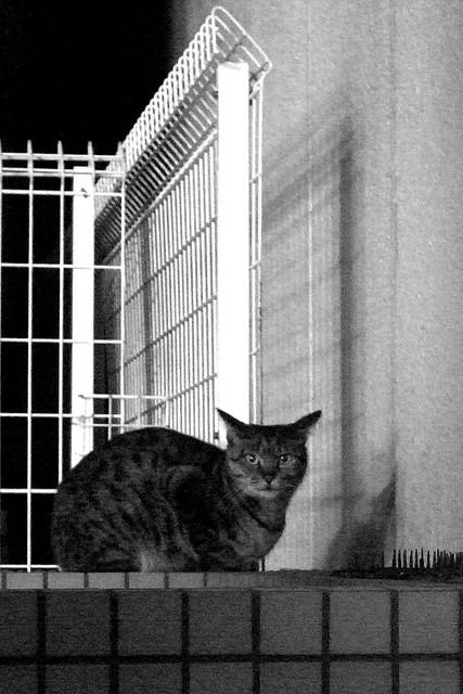 Today's Cat@2010-12-24