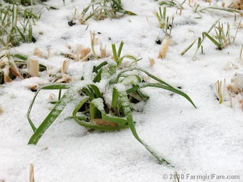 White Christmas Garden 7