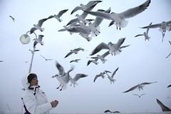 Feeding seagulls (Laicja) Tags: winter sea sky bird beach seagull poland baltic feed sopot trojmiasto