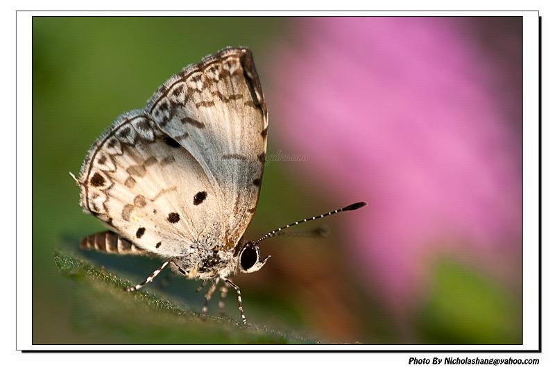 2010 生態攝影小小回顧
