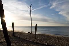 Arcachon #1 (Anne Gaillard) Tags: sea sun mer tree beach canon anne eos soleil arbre plage arcachon gironde gaillard 450d annegaillard dernièrephotodelannée