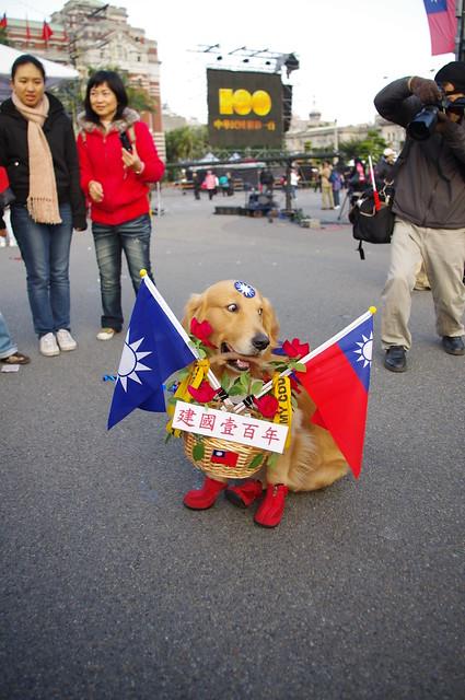 全副武裝參加升旗典禮的黃金獵犬