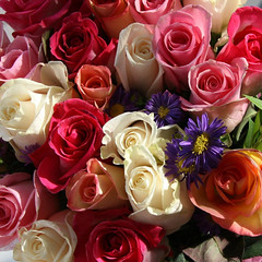 a bouquet for Juney.... (janoid) Tags: birthday roses color love colors beautiful friendship heart sweet lovely juney juneinjanuary