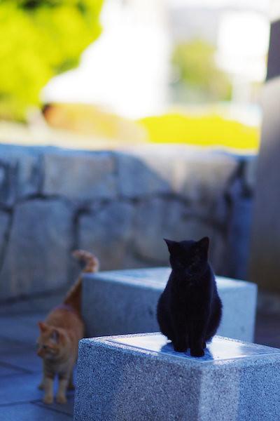 cat, park