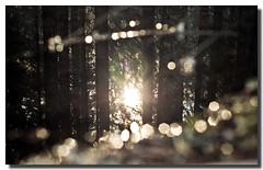 Dentro l'anima (Cammino & Vivo Capovolto  Claudio ) Tags: winter sun snow ice nature water alberi reflections bokeh natura neve luci claudio sole acqua inverno riflessi luce raggi ghiaccio riflesso sfocato mistero splende