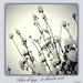 IMG_0070 - my garden winter