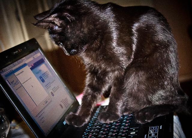IT Cat :-)