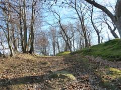 P1000166 (gzammarchi) Tags: strada italia natura campagna albero pietra paesaggio collina camminata castagneto sterrato itinerario castagnara piancaldoli firenzuolafi