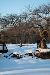 From Across the Pond (danieljo.) Tags: park family trees winter friends sunlight snow love nature girl shadows posing twistytree danieljo