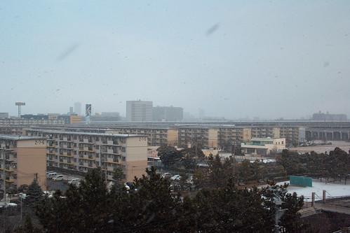 朝起きたら吹雪いてた。