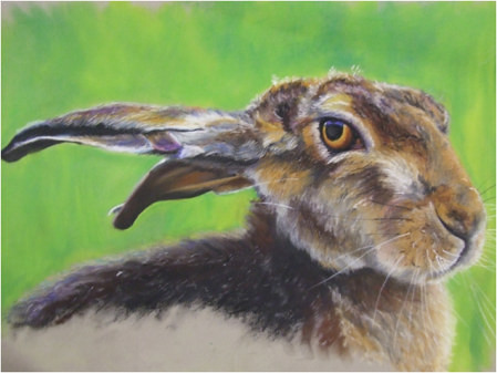 Hare by Paul Cummings