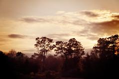 1.16.11 (SassySara) Tags: trees sunset sky skyline clouds 365project nikond90