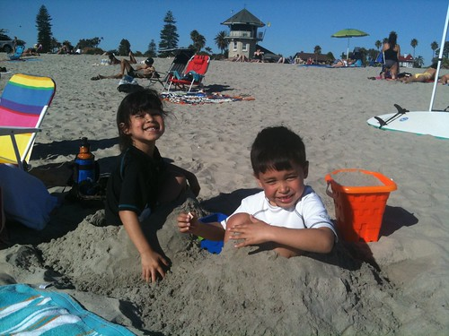 Sand Bugs