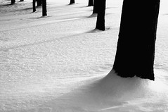 Sun Down (ICT_photo) Tags: shadow sun white snow black tree bark ictphoto ianthomasguelphontario