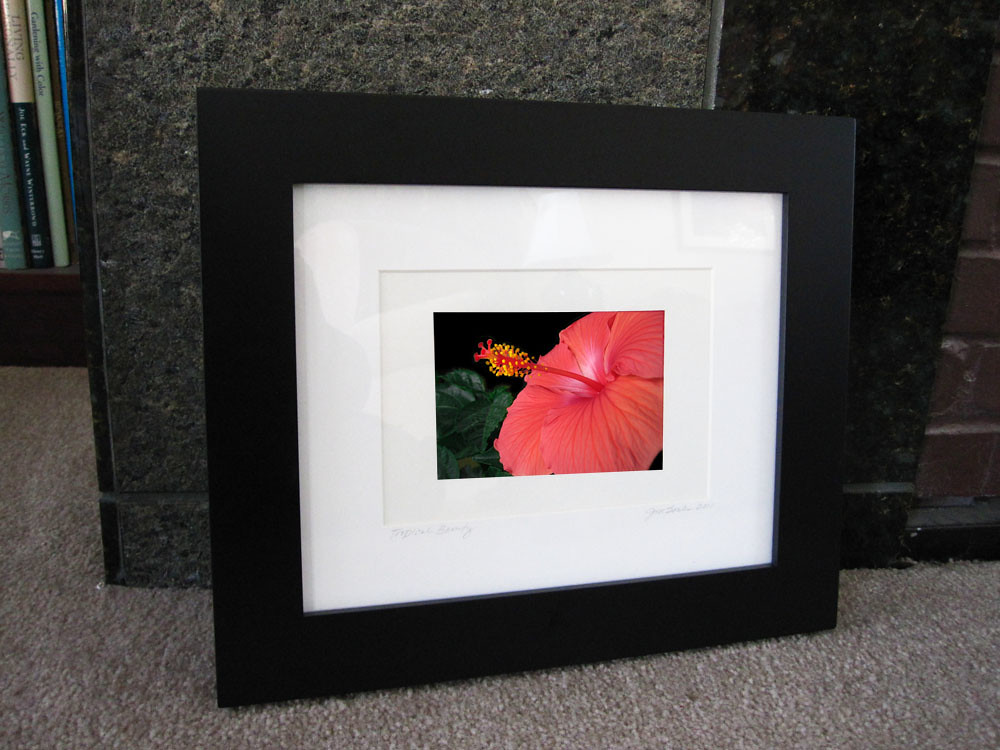 Tropical Beauty Frame Display 1