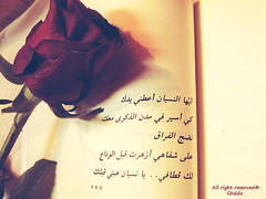 (Ghddo) Tags: flower love book song forget النسيان احلام مستغانمي