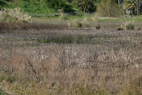 wetland 075