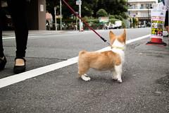 IMG_2132.jpg ( Yukio Endo) Tags: shelly