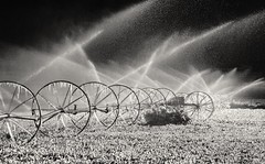 a really cold shower.... (Alvin Harp) Tags: ice icicles wheels irrigation waterspray sprinkler freezing farming utah paragonah parowan october 2016 southernutah monochrome mono bw blackandwhite morninglight sonyilce7rm2 teamsony fe24240mm alvinharp