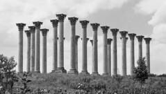 Columns_IMG_0258 (ricklb55) Tags: architecturehousesbuildings bw washingtondc canonpowershotg10 washington dc