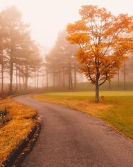 Where are you headed? (Smaku) Tags: nature mountain golf trees most fog japan