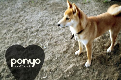 Ponyo 1.25.11