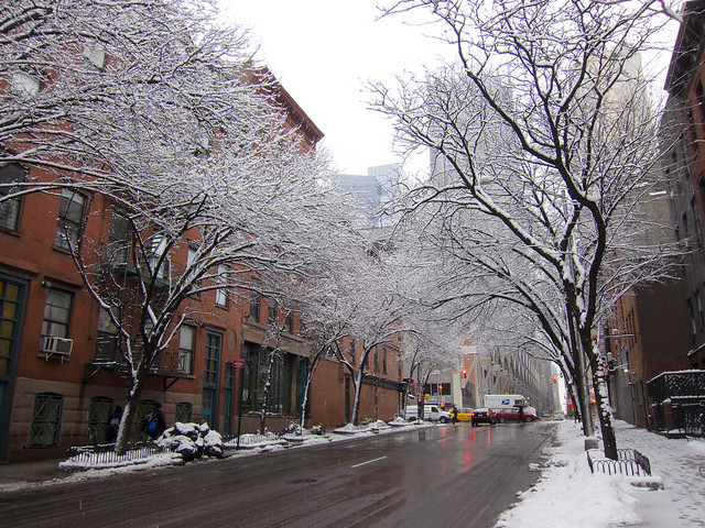 Snow Trees on 40th Street